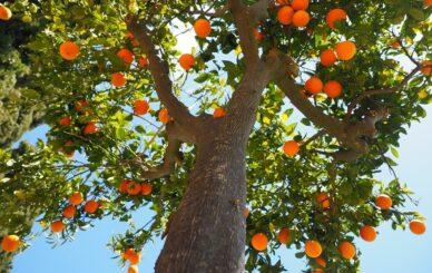 oranges-1117644_960_720